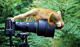 monkey_camera